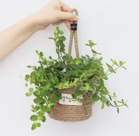 [리빙] 벽걸이 및 테이블용 미니식물